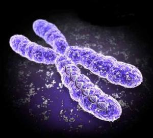 x chromosome