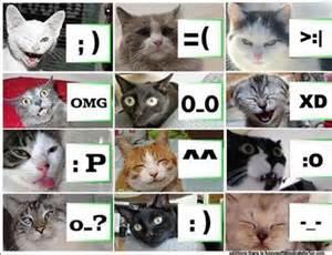 cat punctuation