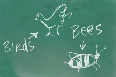 The birds the bees sex education